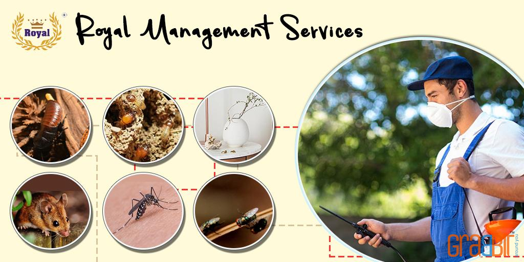 Royal Management Services